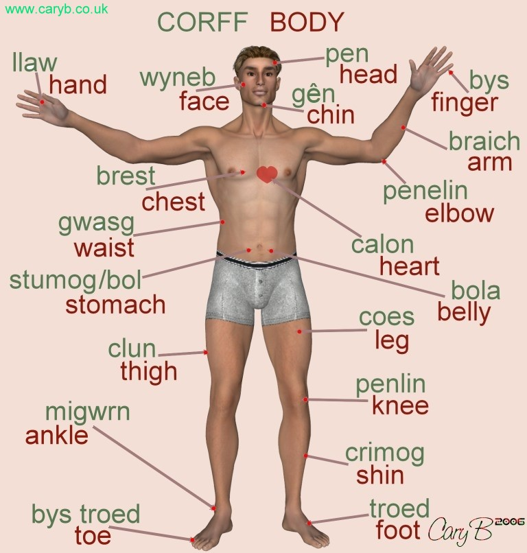 cary b - welsh- parts of the body, Human Body